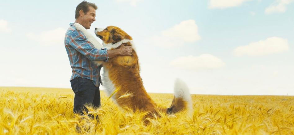 A Dog's Journey   SlashFilm